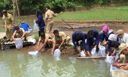 Dinas Peterikan Kabupaten Magelang dan Warga Sambak Tebar 10.000 Bibit Ikan