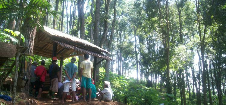 Selayang Pandang Tentang LMDH Wana Hijau Lestari